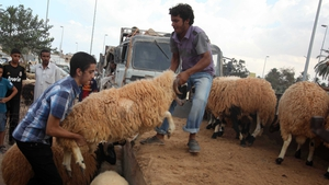 A man tries to load a sheep onto his truck at a local market ahead of the Eid al-Adha celebrations, in Tripoli