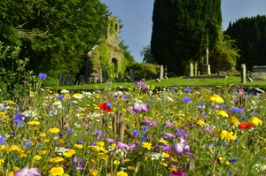 The Butterfly Garden, situated between the river Suir, and Old graveyard, in Kilsheelan, Co Tipperary (Pic: Joe Ormonde)