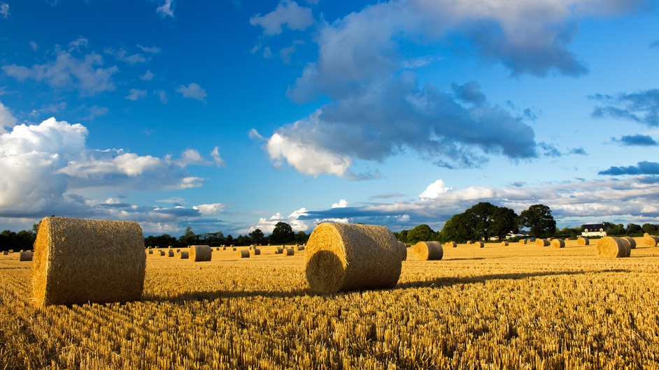 Bales of straw in a field near Geashill, Co Offaly (Pic: Jim Brennan)
