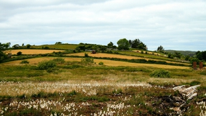 Bog cotton and hay turning in Moycullen, Co Galway (Pic: Marie Larkin)