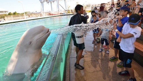 A beluga whale sprays water on visitors at the Hakkeijima Sea Paradise aquarium in Tokyo.