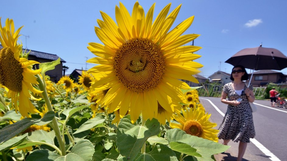 A woman walks past a 'smiling' sunflower in a field in Tokyo