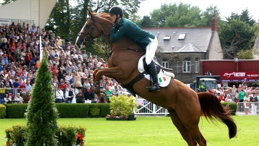 The Showjumping Business
