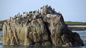 Cormorants birds on a giant stone on the northeast side of the Brehat Island in Cote d'Armor, Britanny