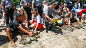 Tourists join Bali Marine Police in releasing sea turtles at a beach in Kuta, Bali, Indonesia