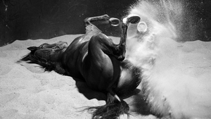 The David Hayes trained Spillway enjoys a roll in the sand after a trackwork session at Flemington Racecourse in Australia