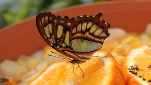 A tropical butterfly paradise Amazonica, in Rotterdam Zoo (Pic: Cindy de Knoop)