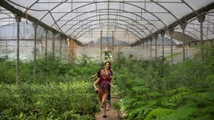 Sisters Nour and Saja Al Banna cool down by running through a greenhouse irrigation system in Gaza City