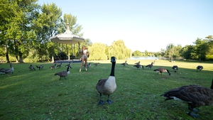 Geese seem oblivious to a new wax figure of Beyonce at Regent's Park in London, England