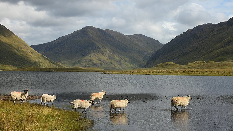 'Sheep dip' at Doo Lough in Co Mayo (Pic: Shane Coogan) Share your images via yourphotos@rte.ie and they could feature on RTÉ