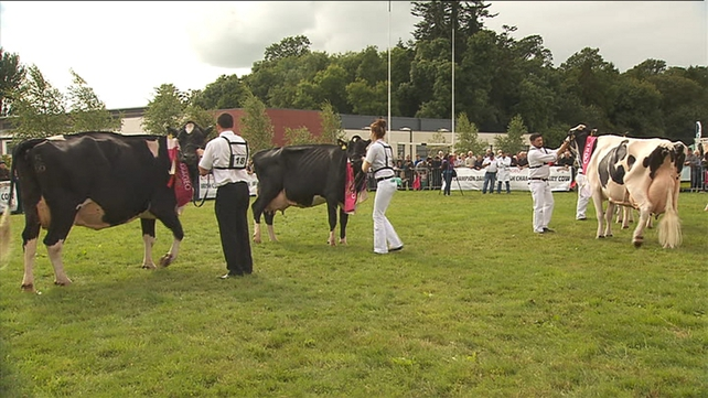 The Prize was won by a nine-year-old Holstein Friesian Cow name Lulu