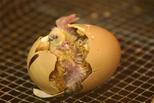 Sunblock In Eggshells