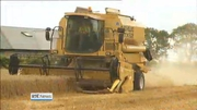 Nine News: Farmers warn of potential drop in cereals grown next year