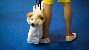 A man transports his dog in a shopping bag at the Pet Fair Asia 2014 in Shanghai