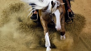 Australian horse Wimpy's Cute Tune competes during the World Equestrian Games 2014 in Caen, France