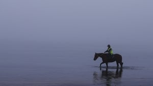 A race horse strolls through the heavy fog in the icy waters at Balnarring Beach in Melbourne, Australia