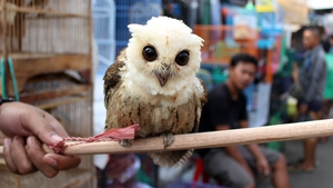 A vendor holds an owl for sale at Jatinegara bird market in Jakarta, Indonesia