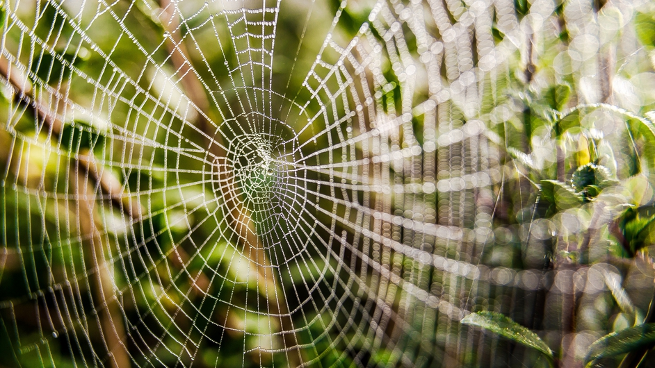 A picture of a spider's web taken in Godewaersvelde, northern France