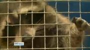 Six One News: DSPCA appeals to public not to buy exotic pets