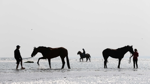 Horses and their grooms cool down