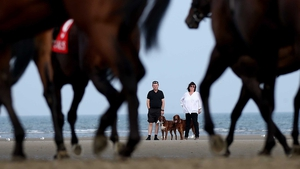 Man and beast enthralled by the action at Laytown