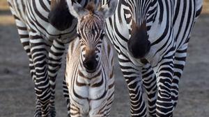 Dublin Zoo's new arrival