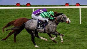 The Grey Gatsby is a general 11-8 chance for the Tattersalls Gold Cup