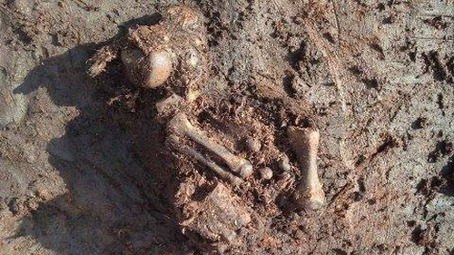 The ancient bog body has been discovered at a midland bog (Pic: National Museum of Ireland)