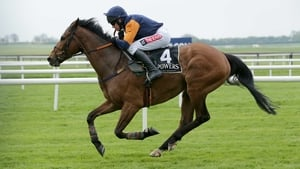 Rebel Fitz could run next month at Tipperary