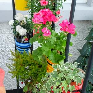 Stripped plant pots - €1.50, Eurogiant, http://www.eurogeneral.ie