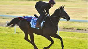 Mutual Regard is one of two Johnny Murtagh-trained horses competing in the Melbourne Cup