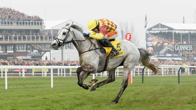 Dynaste features in Old Roan entries