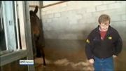 Six One News: Racehorse trainer found guilty of having performance enhancing drugs