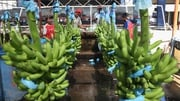 Chiquita shareholders reject bid approach from Fyffes