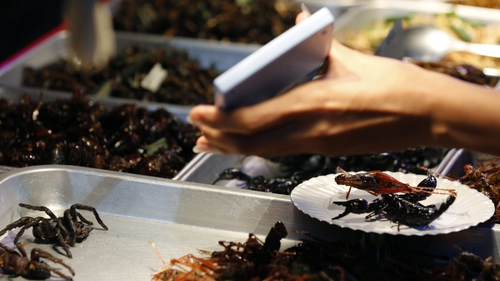 """""""Protein represents the main nutrient constituent of insects, with cockroaches, grasshoppers, crickets and locusts containing protein content amounting to60 to80 percent"""""""