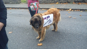 Some canine support for the demonstration in Swords, Co Dublin