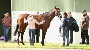 Moore has long been booked for the mount on Protectionist