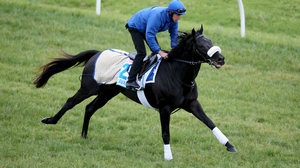 Cavalryman pictured during trackwork ahead of the Melbourne Cup at Werribee Racecourse