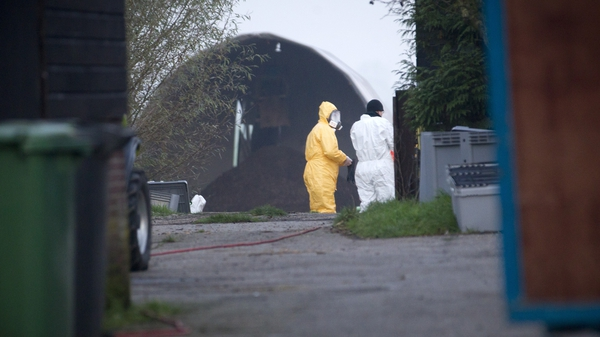 Workers in protective clothing on the farm near The Hague where the second case of bird flu was detected