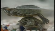 RTÉ News: 90s Turtlemania leads to concern over real-life reptiles