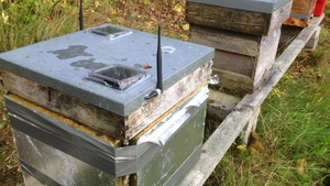 The smart beehive can autonomously track the activity of the bee colony and conditions within the hive