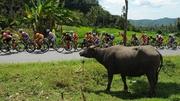 An interested spectator keeps an eye on the peloton during the Tour de Singkarak in Padang, Indonesia