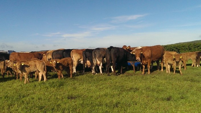 BSE: What does it mean for Irish agriculture?