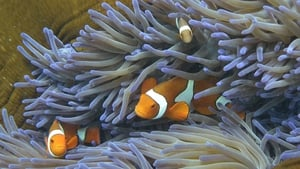 Fish swim through coral at the Great Barrier Reef