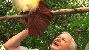 David Attenborough with the pesky creature, the Bird of Paradise, who tried to upstage him while filming.