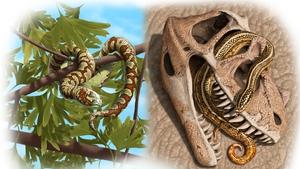 Portugalophis lignites (left) in a ginko tree; Diablophis gilmorei (right), hiding in a ceratosaur skull. Credit: Julius Csotonyi/Nature