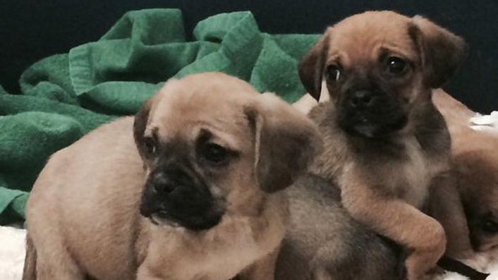 World's first IVF puppies born in New York