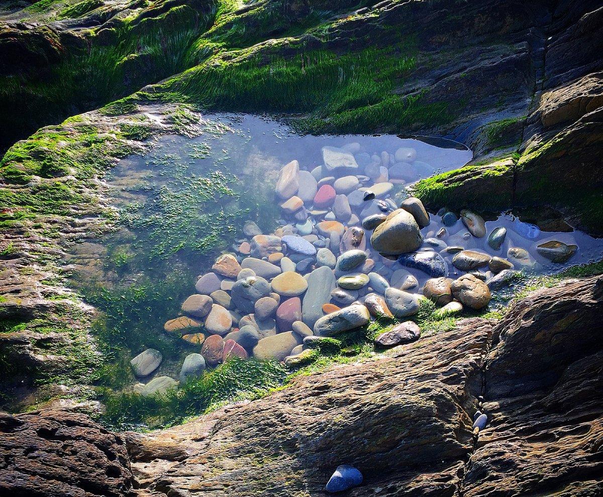Explore your shore: rockpools