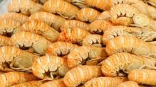 Grilled Garlic Langoustines