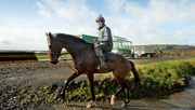 Douvan at Willie Mullins' yard in Bagenalstown, Carlow